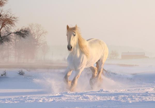 pasze treściwe dla koni