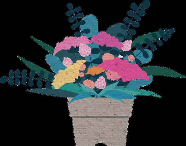 hurtownia kwiatów doniczkowych